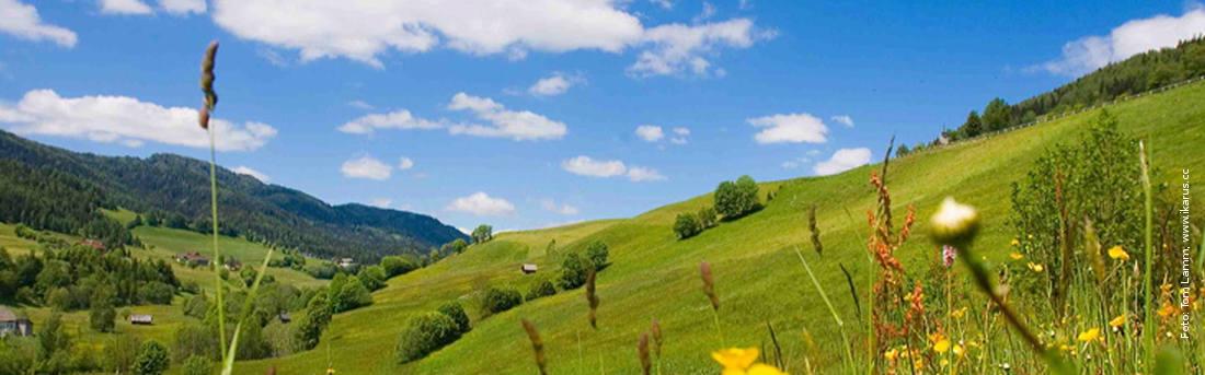 Sommerwiese am Kreischberg, Foto: Tom Lamm, ikarus.cc